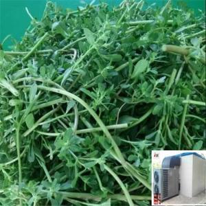 蔬菜烘干干燥用什么设备好呢