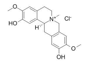 盐酸黄柏碱 CAS:104112-82-5