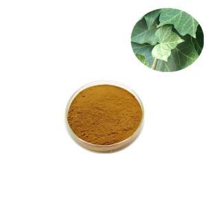 常春藤提取物-常春藤总苷10%