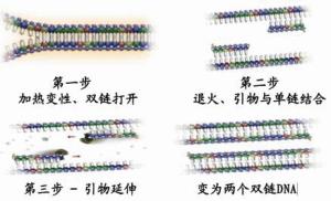 猪圆环病毒PCR检测试剂盒 产品图片