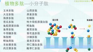胶原蛋白肽的拷贝