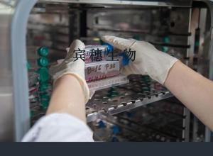 A704(人肾癌细胞) 产品图片
