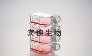 T241(小鼠纤维肉瘤细胞) 产品图片
