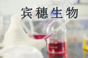 M109(小鼠肺癌细胞) 产品图片