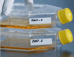 HC11小鼠乳腺上皮细胞