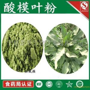酸模叶粉 80目 皱叶酸模提取物 功效与作用 产品图片