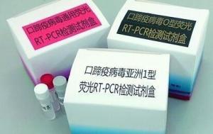 异尖线虫属染料法荧光定量PCR试剂盒产品图片