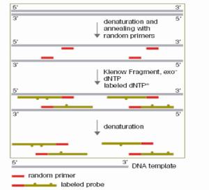 随机引物法DNA探针标记试剂盒 产品图片