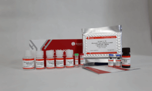 SEKH-0002人白细胞介素1β检测试剂盒