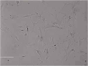Rat Intestinal Epithelial Cells大鼠小肠粘膜上皮细胞